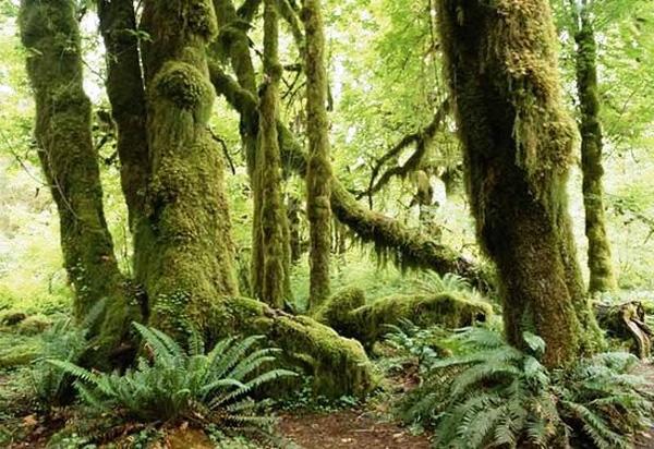 Доклад по географии на тему влажные экваториальные леса 9514