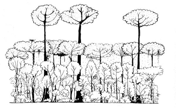 дождевого леса (схема)
