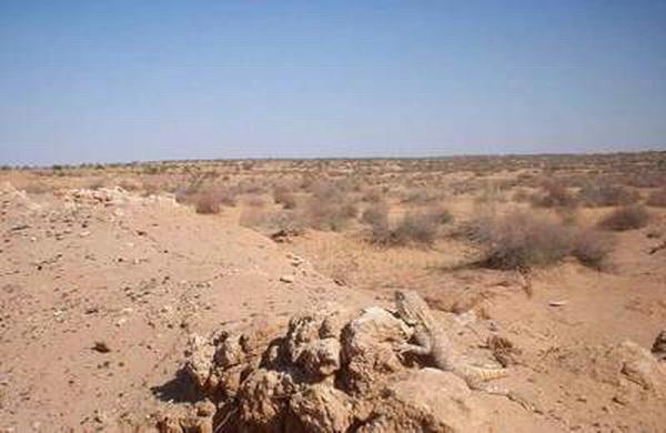Растительность пустынь и полупустынь Неизвестное об известном  Узбекистан пустыня летом