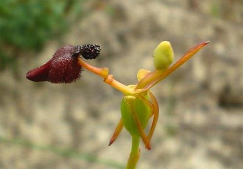 Самые маленькие цветы