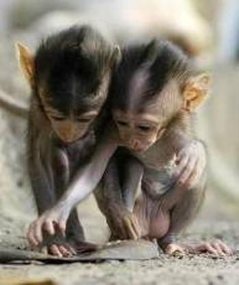 Игры животные обезьяны